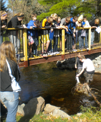 Numerous young students stand on a bridge overlooking a creek, while two students stand in the creek itself taking a water sample.